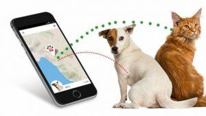 Gatti e cani sotto attacco hacker: a rischio i collari con localizzatore Gps