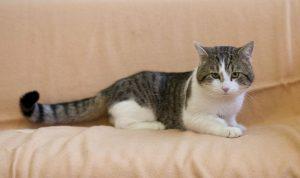 Gatti e cani: 6 pericoli (anche letali) nascosti in casa