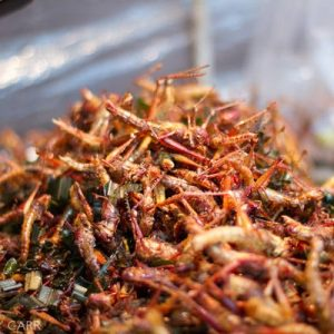 """""""Grilli fritti, alghe e gin al gusto di formica: il menu del futuro"""" è bloccato Grilli fritti, alghe e gin al gusto di formica: il menu del futuro"""