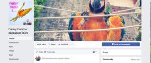 Investito Frankie, il pappagallo amico Michele Scarponi