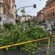Il grosso ramo caduto in via Leone IV a Roma a Prati