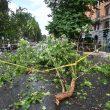 Roma, nel quartiere Prati cade grosso ramo