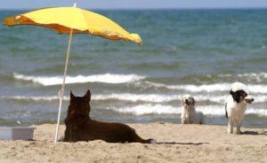 Cani in spiaggia, le info per i proprietari e il telefono amico Aidaa