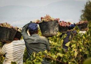 Marsala, arruolavano migranti: 12 ore di lavoro al giorno a 3 euro l'ora e pane duro a pranzo. Arrestati due caporali