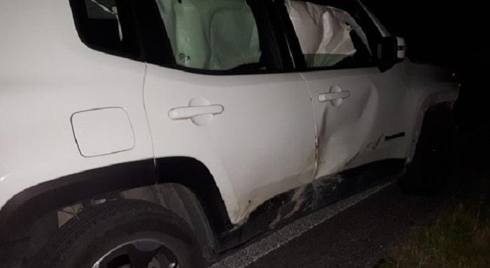 Ancona auto contro cinghiale