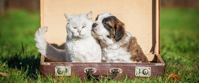 cane-gatto-in-vacanza