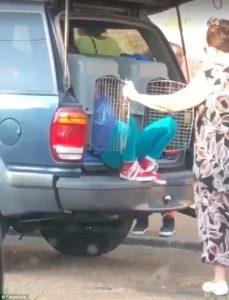 Memphis, trasporta le nipotine nella gabbia del cane: denunciata4