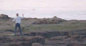 YOUTUBE Ragazzi prendono a sassate le foche alla riserva naturale di St Mary