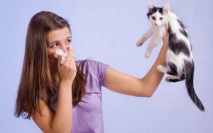 Allergia ai gatti, la soluzione in un vaccino