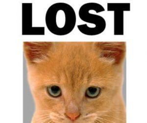 Cani e gatti smarriti: ecco come ritrovarli