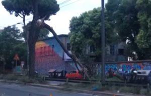 Roma, via Prenestina: ramo di pino crolla sulla rete di alimentazione dei tram