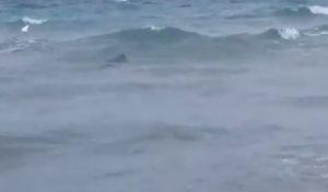 squalo san Foca