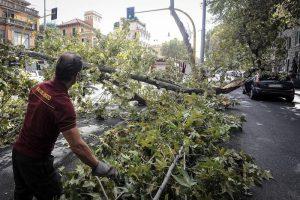 Crolla albero via Lanciani