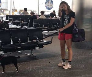 Cane defeca aeroporto
