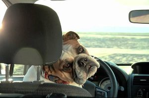 La Spezia: lascia il cane in auto sotto al sole, arrivano i carabinieri ma è troppo tardi