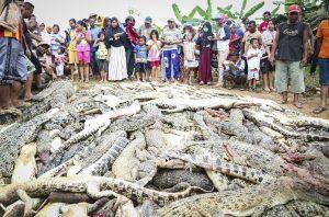 indonesia coccodrilli