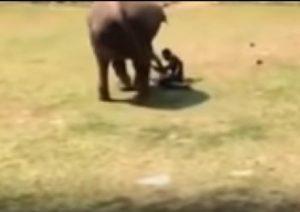 Elefante soccorre custode zoo