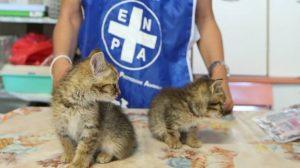 Maltrattamenti sugli animali: un indagato ogni 90 minuti