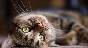 Gatti e cani in estate: 9 consigli per proteggerli dal caldo
