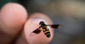 Numana (Ancona). Rischia choc anafilattico per un insetto: per fortuna il vicino d'ombrellone è medico