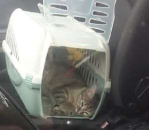 Gatti, cani e in auto: come trasportarli e viaggiare in sicurezza