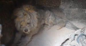 Grecia, il cane nascosto nel barbecue