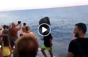 Calabria, elefante scappa dal circo e va al mare per un tuffo refrigerante VIDEO