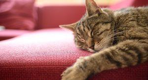 Gatti e graffi, come limitare i danni in casa: 5 consigli