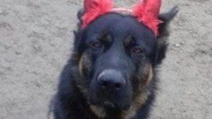 Kuma, taglia da 10mila euro sui killer del pastore tedesco