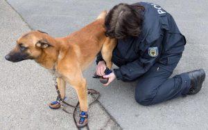 """Aidaa, appello a Salvini: """"Scarpe anti-caldo per i cani poliziotto"""""""