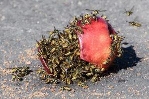 Campobello di Mazara, uomo muore assalito da uno sciame di vespe
