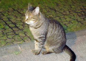 Cocullo (L'Aquila): vietato dar da mangiare ai gatti. Ordinanza del sindaco
