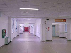 Leptospirosi, uomo ricoverato ad Ancona con la sindrome di Weil: rischia la morte