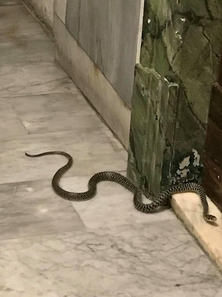 Serpente di fronte porta casa