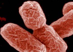 Ulcera carnivora: in Australia altri 49 casi