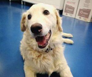 Rovigo, cane fuori da finestrino e ucciso: condanna padrone e veterinario