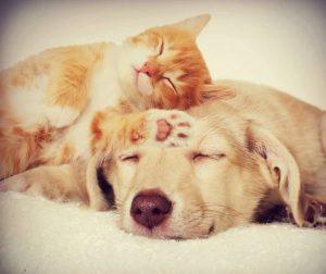 Parassiti in cani e gatti: sintomi e cura