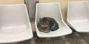 Gatti e cani negli ospedali per stare accanto ai pazienti: la novità in Umbria