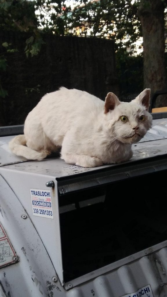 gatto imbalsamato roma