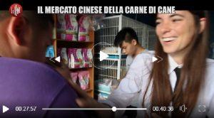 Le Iene, Giulia Innocenzi ride nel servizio sulla macellazione dei cani: è polemica