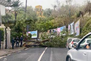 Allerta meteo, vento forte anche a Napoli: alberi cadono in strada5