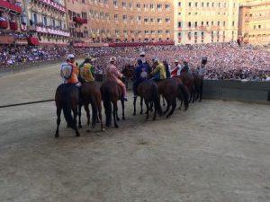 Palio di Siena, è morto il cavallo Raol dopo caduta rovinosa