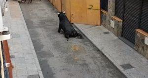 Madrid toro salta spezza gambe