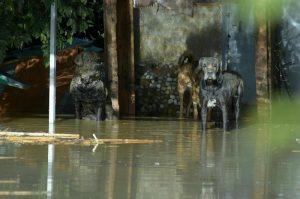 Maltempo, 10 morti in provincia di Palermo89