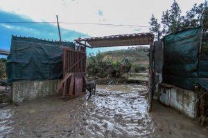 Maltempo, 10 morti in provincia di Palermo14