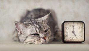Il tempo per cani e gatti: ecco come lo misurano