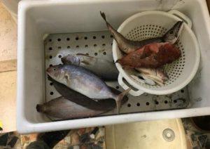 Pesce scaduto nel 2010 a Bisceglie, baccalà trattato con calce a Catania: blitz della Guardia costiera