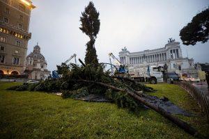 """Roma, arriva il nuovo """"Spelacchio"""": l'albero ha qualche ramo spezzato 1"""