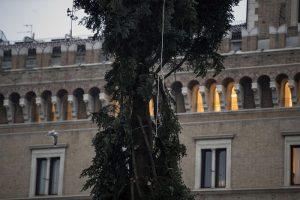 """Roma, arriva il nuovo """"Spelacchio"""": l'albero ha qualche ramo spezzato 2"""