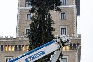 """Roma, arriva il nuovo """"Spelacchio"""": l'albero ha qualche ramo spezzato 6"""